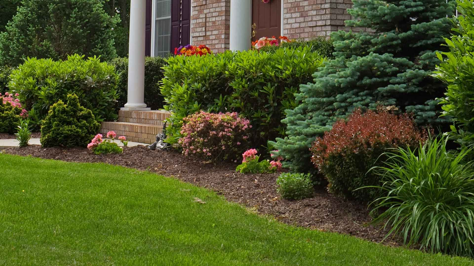 Recently mulched landscaping bed at a home in Westfield, IN.
