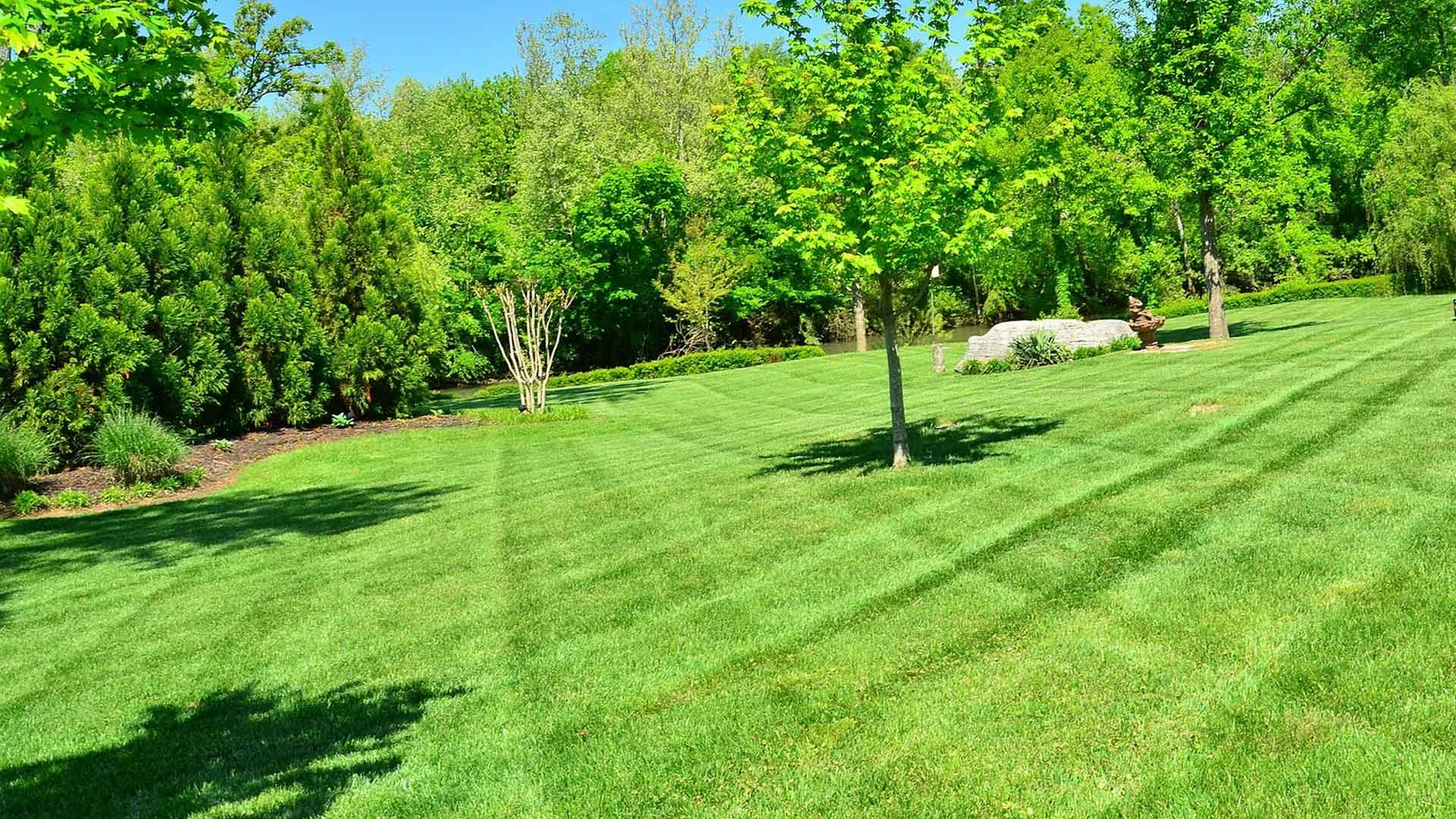 A large lawn in Carmel being mowed regularly by Spider Lawn & Landscape.