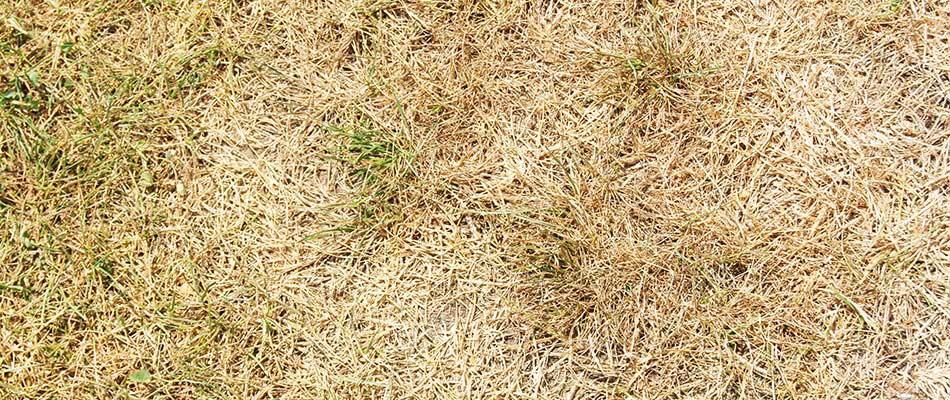 Are You Killing Your Lawn by Cutting it Too Short?