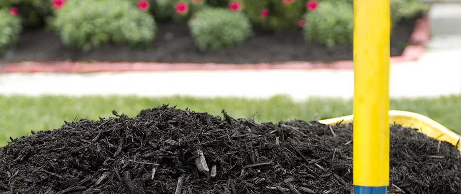 Installing mulch in a landscape bed in Noblesville, IN.