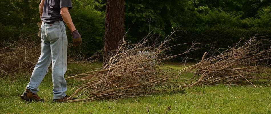 Why It's Time to Schedule a Spring Yard Cleanup