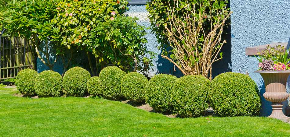 When to Do Landscape Maintenance Including Trimming/Pruning, Mulching, Weeding, & More