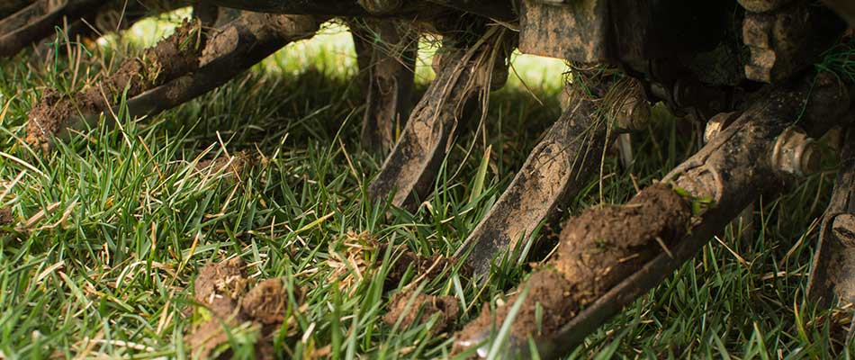 4 Reasons Your Lawn Needs Aeration & Overseeding