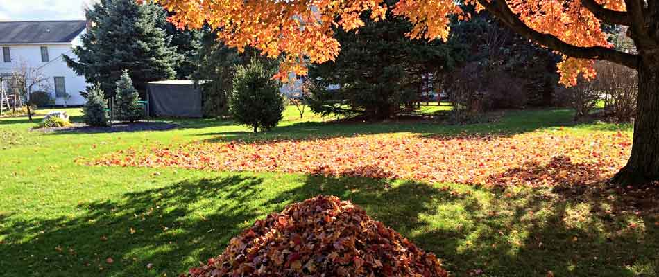 Leaves raked into a pile during a fall yard cleanup service at a home in Carmel, IN.
