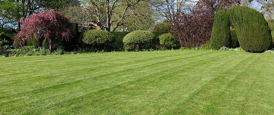 This Westfield lawn is insect and disease-free thanks to proper mowing.