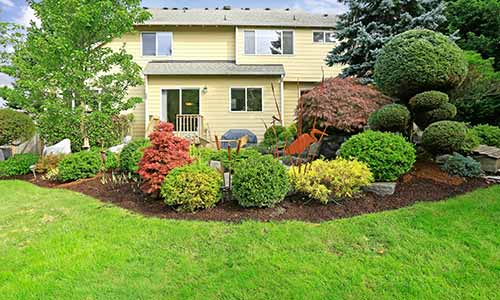 Professionally trimmed shrubs in front of a home in Carmel.